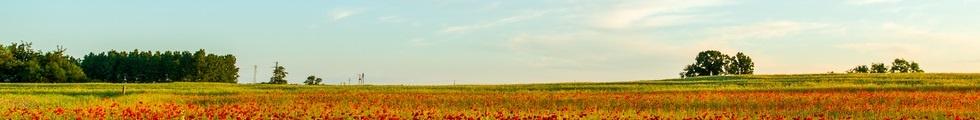 Tulpen Panorama
