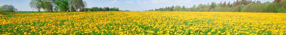 yellow  flowers under blue cloudy sky